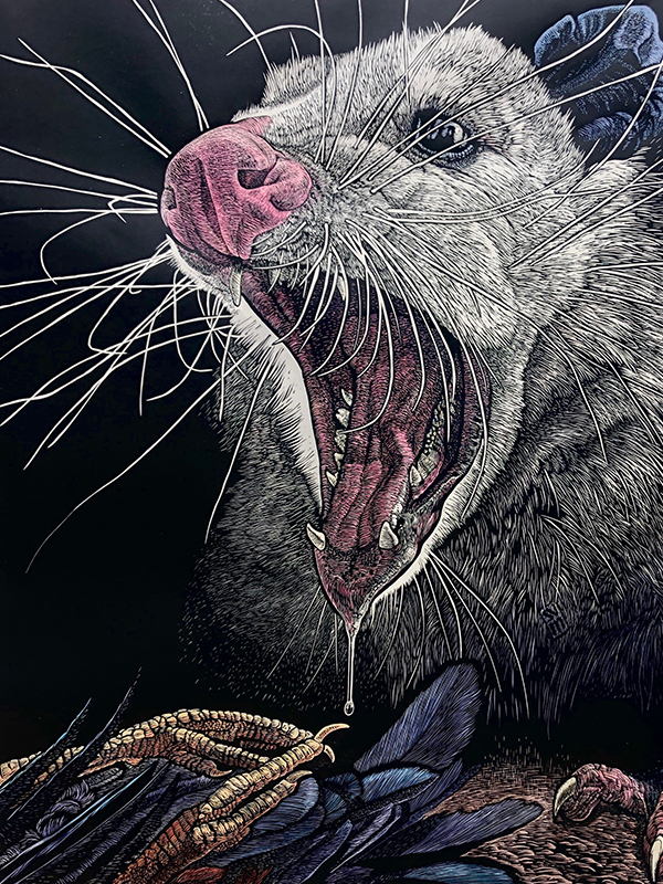 'Possum Defensive' woodcut by S.V. Medaris