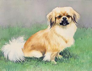 Tamlyn Akins pet portrait of Sadie, dog; watercolor
