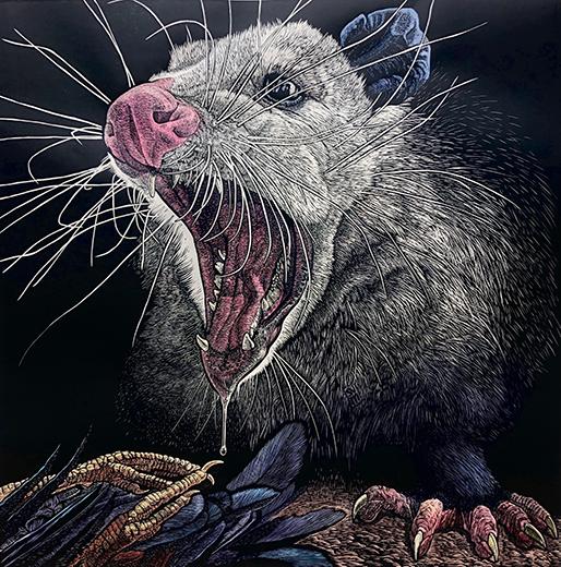 S.V. Medaris' hand-colored Woodcut 'Possum Defensive'