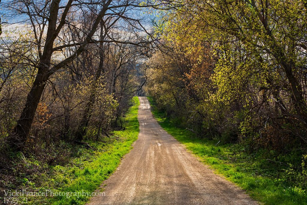 Vicki France Photography Hollow Rd